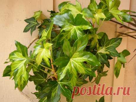 Какие красивые неприхотливые растения стоит посадить в своей квартире? | Все о домашних цветах | Яндекс Дзен