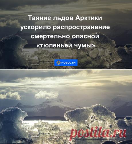 Таяние льдов Арктики ускорило распространение смертельно опасной тюленьей чумы - Новости Mail.ru
