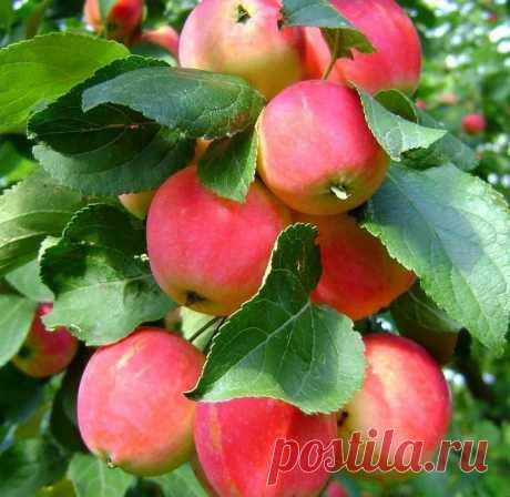 АВГУСТ — месяц самый вкусный:  Дынный, Яблочный, Арбузный,  И Медовый, и Цветочный,  Ароматный, сладкий, сочный... ------------------------------