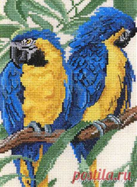 loros azules – pilar ibarz – Picasa tīmekļa albumi