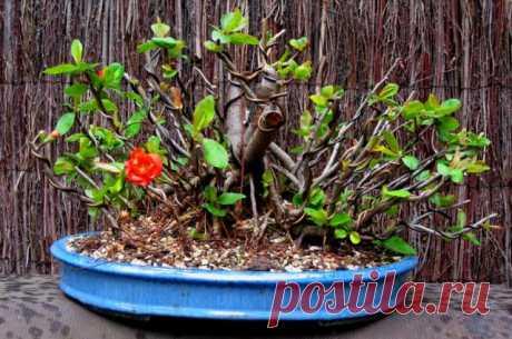 Какие растения нужно обрезать после цветения | Прочие многолетники (Огород.ru)