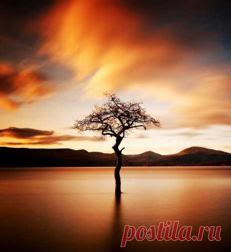 lone tree | Wonderful Tree-Forestscape