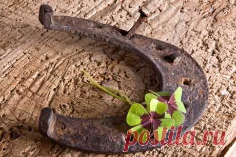 Комнатные растения, которые привлекают удачу, деньги и приносят счастье в дом   По полочкам (Огород.ru)