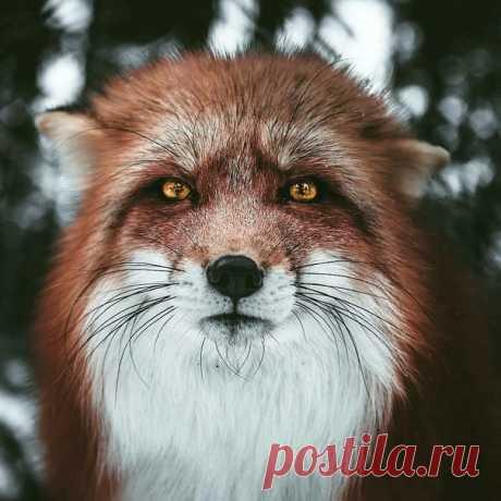 «Ясноглазый» Автор фото – Мария Лесная: nat-geo.ru/photo/user/343250/