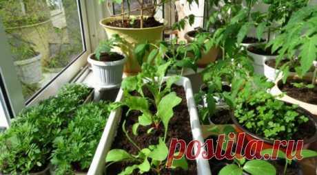 Рассада на балконе: уход и выращивание растений | Obustroeno.Com