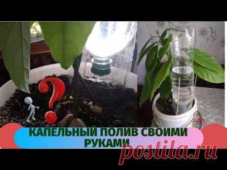 Очень простой бесплатный капельный полив для  комнатных растений.Можете спокойно отдыхать - YouTube
