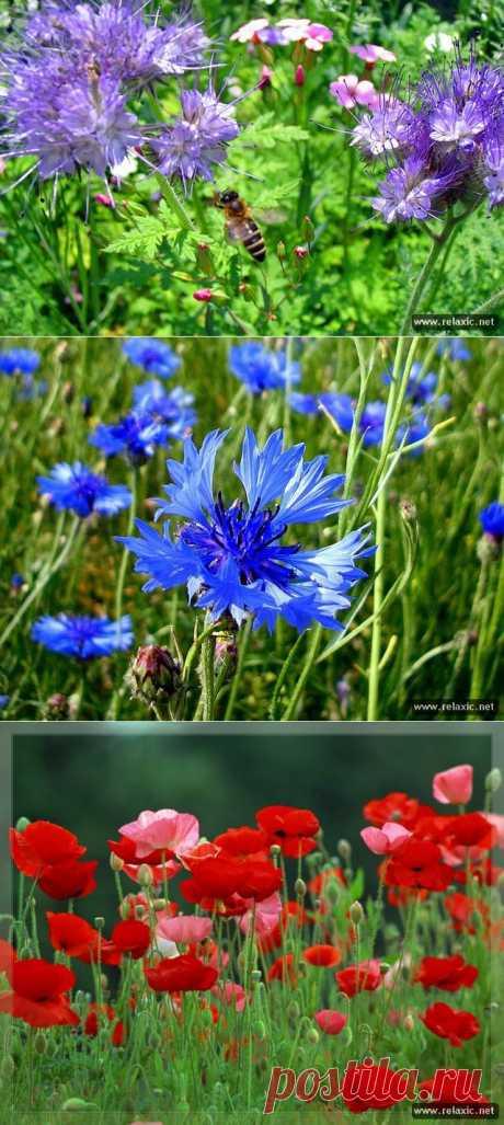 (+1) - Яркие цветы прошлого лета | САД НА ПОДОКОННИКЕ