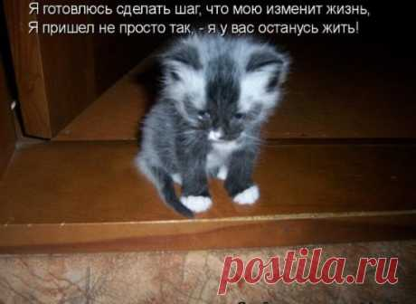 #котоматрица