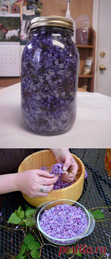 Be in time in the peak of blossoming: fill capacity with vegetable oil and violet flowers