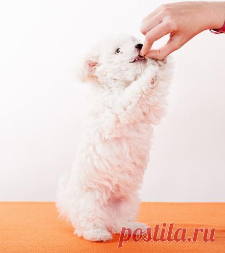 Какую кашу (крупу) полезно давать своей собаке? | Собачье счастье | Яндекс Дзен