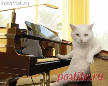Что вам исполнить?! | KotoMail.ru