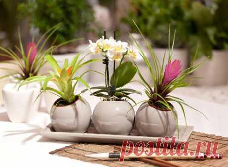 Ошибки ухода за комнатными растениями | Хитрости Жизни