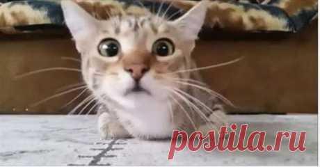 Кот, который смотрит фильм ужасов, стал звездой интернета. Многие владельцы котов и собак хвастаются, что их питомцы все понимают. Этот факт можно признать, если животное живет долго с человеком: оно привыкает к словам хозяина, приучается ко многим правилам.