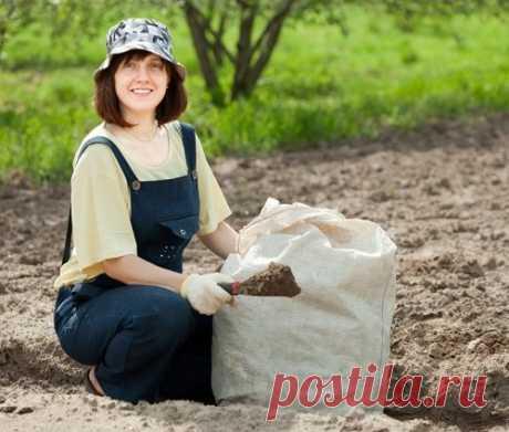 Накормите почву! Как сделать землю на даче плодороднее?