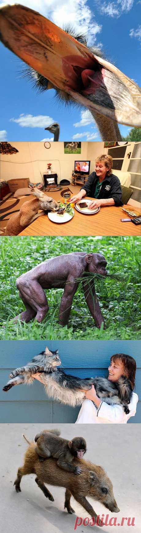 » Животные в новостях Это интересно!