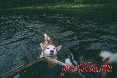 «Пловец». Автор фото — Игорь Цыбульский: nat-geo.ru/photo/user/163961/