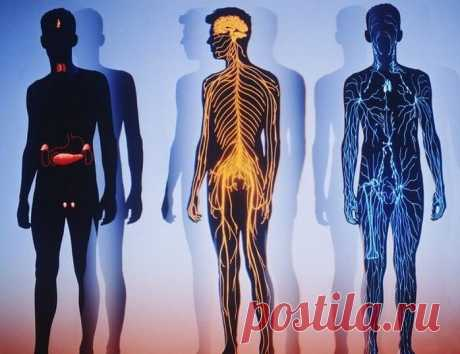 Малоизвестный способ оздоровления: лимфостимуляция по Костерову