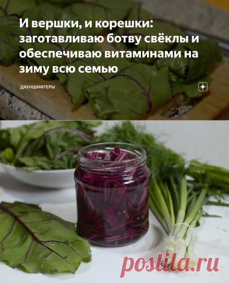 И вершки, и корешки: заготавливаю ботву свёклы и обеспечиваю витаминами на зиму всю семью | Дауншифтеры | Яндекс Дзен