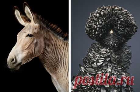 Концептуальные портреты животных - Телеканал «Моя планета»