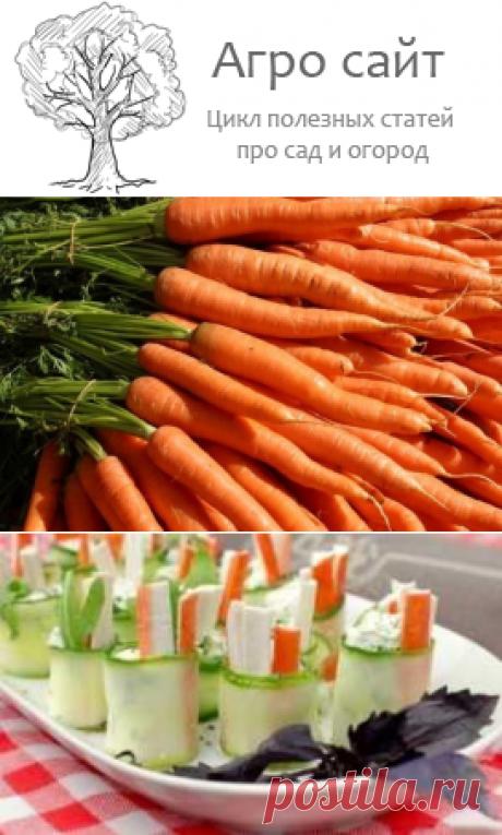 Народные средства из моркови - вкусные лекарства