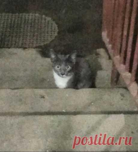 Котята в опасности! Нужна хотя бы передержка.  Санкт-Петербург!НУЖНА ПЕРЕДЕРЖКА! КОТЯТА В ОПАСНОСТИ!SOS!!! Два маленьких котёнка, дымчатый и чёрный с белыми манишками, прячутся в подъезде жилого дома. Часть жильцов подкармливает котят, но остальн…