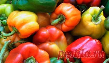 Перец: выращивание, посадка, уход в открытом грунте
