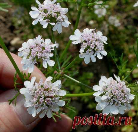 Растения, которые помогут избавиться от мышей с вашего участка