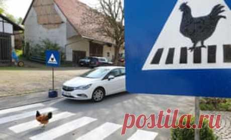 Цыпленок идет на зебру, отмеченную специальным знаком в Эртингене, Германия. Местный житель установил пешеходный переход для цыплят соседней фермы, поскольку животные регулярно переходят дорогу, чтобы пить из деревенского фонтана на другой стороне улицы
