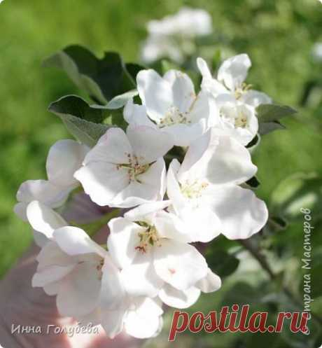 Apple-tree flowers from cold porcelain. Master class | Country of Masters