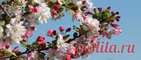 Лунный посевной календарь на май 2020 садовода и огородника Лунный посевной календарь на май 2020 садовода и огородника. Что нужно сделать в мае в цветнике. Когда сеять в грунте в Подмосковье, на Урале в Сибири