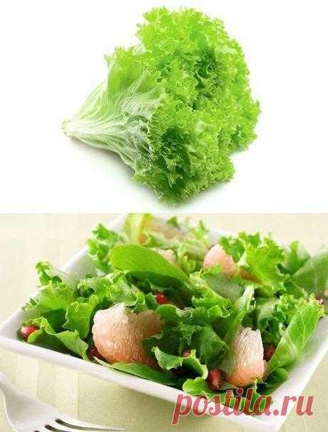 Салат зеленый. Что мы о нем знаем?