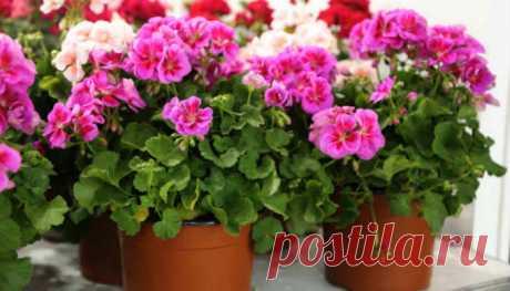 Самодельные удобрения для комнатных растений: польза или вред? — Мир Растений