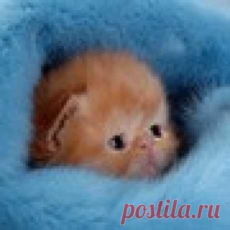 милашка котеночек