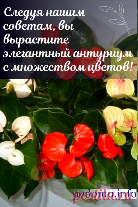 Размножение антуриума в домашних условиях — как ухаживать за цветком и правильная пересадка #комнатныерастения #комнатныецветы #цветы #антуриум#люблюцветы #цветыдома #цветокантуриум #цветоводство#цветывгоршках #домашниецветы #цветочки #красота #красивыецветы #даритецветы #длядуши #цвететантуриум#домоводство