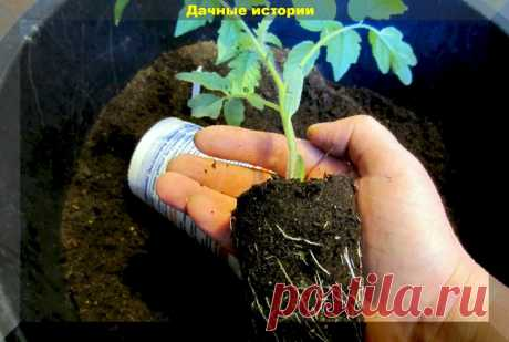 Забота о корнях рассады начинается с приготовления грунта. Важные добавки в грунт для рассады | Дачные истории | Яндекс Дзен