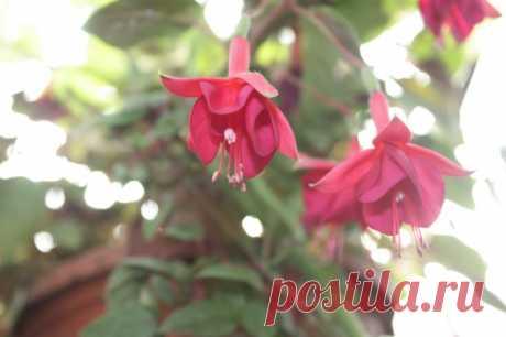 Осенний листопад у комнатных растений — Садоводка