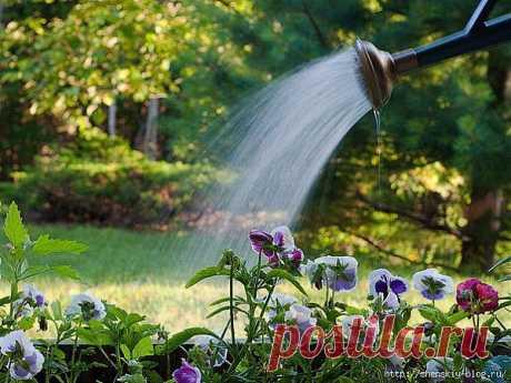 8 правил полива огорода.
