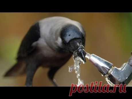 10 FACULTADES MENTALES ASOMBROSAS DE LOS ANIMALES