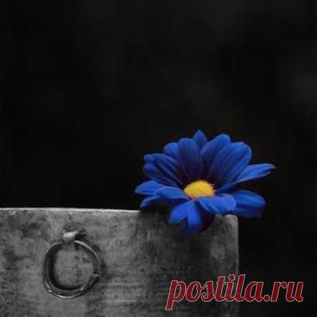 В каждом человеке, в той или иной степени, противодействуют две силы:  потребность в уединении и жажда общения с людьми... Владимир Набоков