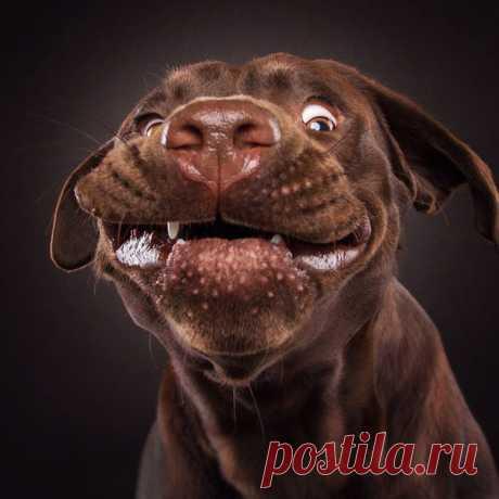 Позитив!!!! Много смешных фото.