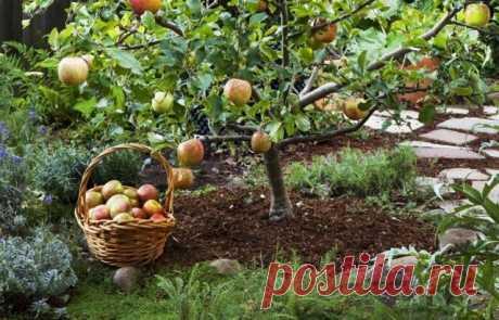 На что обратить внимание при покупке плодовых саженцев?