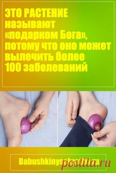 Это растение называют «подарком Бога», потому что оно может вылечить более 100 заболеваний (рецепт) — Бабушкины секреты