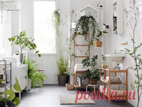 Hастения в квартире – какие выбрать