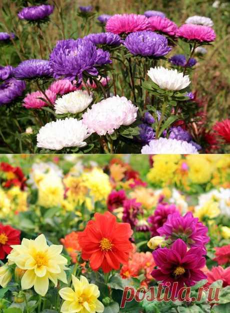 15 цветочных культур, которые нужно посеять на рассаду в апреле / Дача — это философия моей жизни. / 7dach.ru