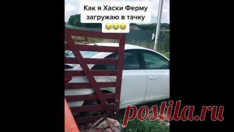 Хорошая дрессировка))))))))