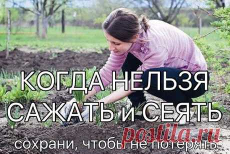 КОГДА НЕЛЬЗЯ САЖАТЬ и СЕЯТЬ Народные приметы для садоводов-огородников! - Картофель нельзя сажать на Вербной неделе, по средам и субботам - будет портиться. - Если весна ранняя, то капусту, как и лук сеют на четвертой неделе Великого поста или позже - на пятой. - Если весна запаздывает, то производят посев в последние дни Страстной недели, особенно в субботу. - Подсолнухи лучше сажать в субботу, до восхода солнца или после его захода. Последнее предпочтительнее. При посадке молчат и не грызут се