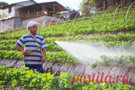 Волшебная подкормка клубники для богатого и крупного урожая | Идеальный огород | Яндекс Дзен