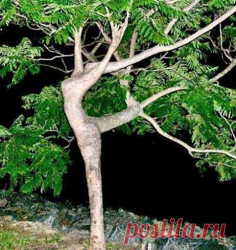 Tree dancing ... | The Beauty of Trees II