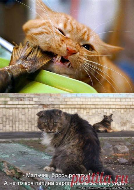 Кошачий вальс
