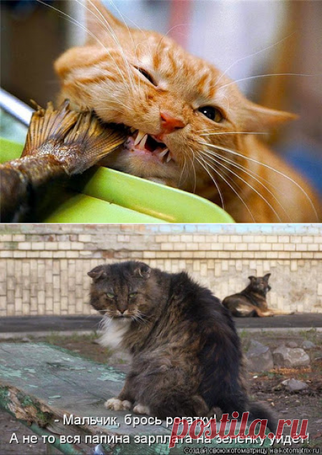 Cat's waltz